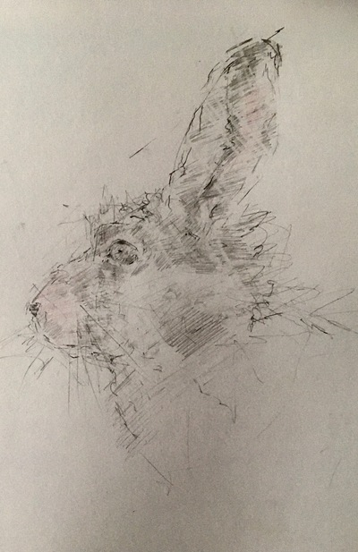 Joyce Gunn Cairns Hare Profile Pencil  29 x 20 cms £150 (unframed)