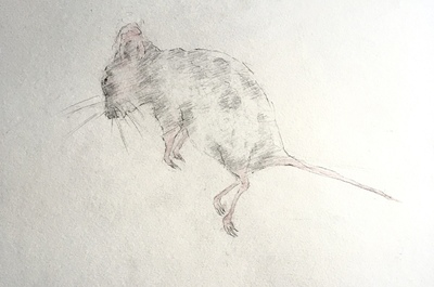 Joyce Gunn Cairns Wee Mouse Pencil  20 x 29 cms £150 (unframed)