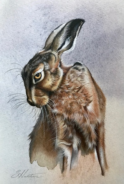 Susan Hutchison Study of a Hare 2 Watercolour  17 x 12 cms  £250
