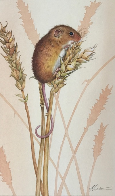 Harvest Mouse Watercolour 22 x 15 cms £395