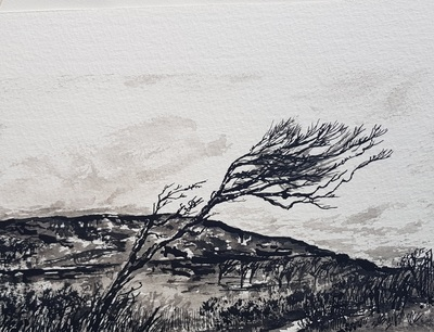 Naomi Rae Windblown, Calgary, Isle of Mull Indian ink on paper 12 x 20 cms £195