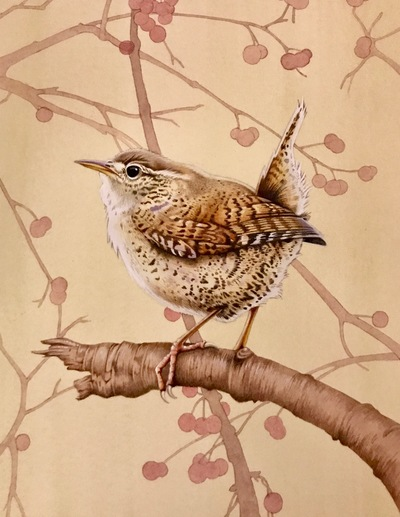 Little Wren Watercolour 21 x 17 cms SOLD